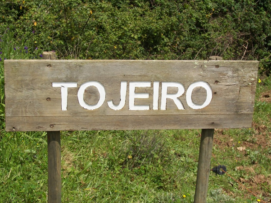 tojeiro-sign-5